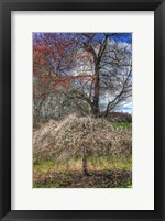 Framed Spring Cherry Tree