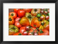 Framed Tomatoes 2015