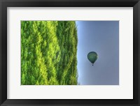 Framed Tuscan Cedar and Balloon