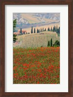 Framed Tuscan Vertical Poppies