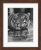 Framed Cool For Cats