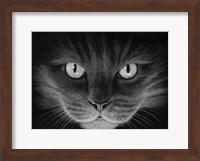 Framed Hypno Cat