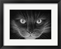 Framed Hypno Cat