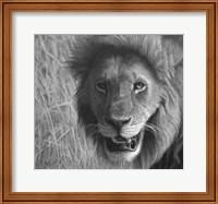 Framed Lion In The Massai Mara