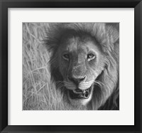 Framed Lion In The Massai Mara