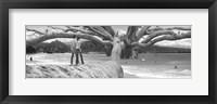 Framed Nut Tree
