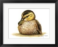 Framed Duckling