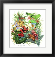 Framed Frogs About