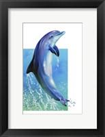 Framed Jump Dolphin