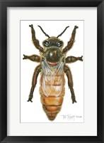 Framed Queen Honey Bee