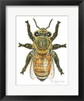 Framed Worker Honey Bee