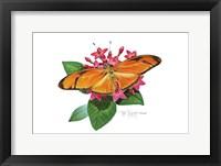Framed Julia Butterfly