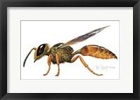 Framed Wasp