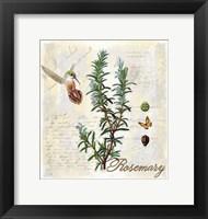 Framed Rosemary Herb