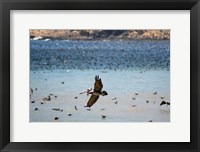 Framed Flock Of Pelicans