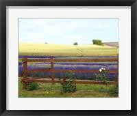 Framed Lavender and Roses