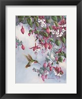 Framed Broadtail And Fuschia