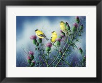 Framed American Goldfinch And Thistle