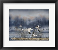 Framed Misty Flight