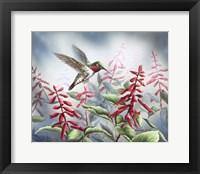 Framed Summer Hummingbird