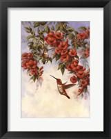 Framed Hummingbird E