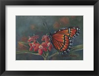Framed Monarch