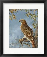 Framed Retail Hawk