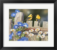 Framed Morning Glories and Finches