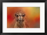 Framed Dromedary Camel