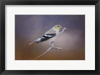 Framed Goldfinch In The Light