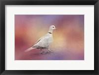 Framed Spring Eurasian Collared Dove