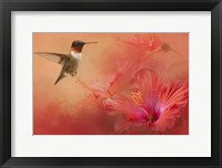 Framed Hummingbird and Peach Hibiscus