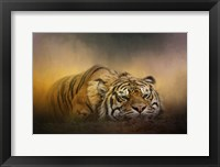 Framed Tiger Awakens
