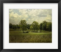 Framed Cattle Pond In Summer