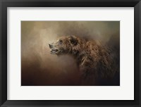 Framed Morning Grizzly