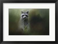 Framed Little Bandit