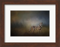 Framed Coyote At Shiloh