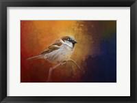 Framed Autumn Sparrow