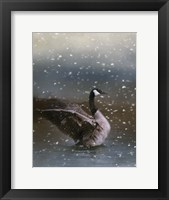 Framed Snowy Swim