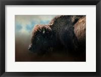 Framed American Bison After The Storm