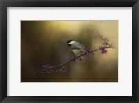 Framed Chickadee In The Golden Light