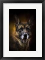 Framed Shepherd Glow