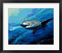 Framed Mighty Bull Shark