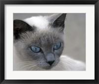 Framed Blue Eyes