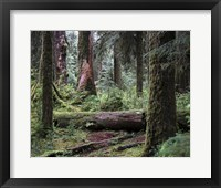 Framed 237 Olympic NP