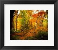 Framed Chimneys Trail GSMNP, TN