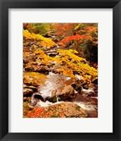 Framed Treemont, GSMNP, TN