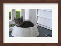 Framed Cat in a Bowl