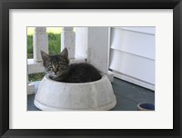 Framed Cat in a Bowl