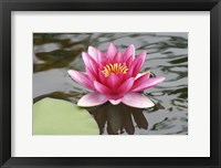 Framed Pond Lily Purple Lily Reflecting